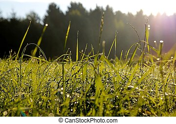 Morning dew 2 - Morning dew on green plants in front of a...