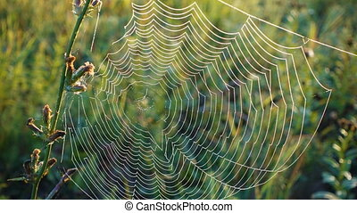 Morning dew on spiderweb at grass on field