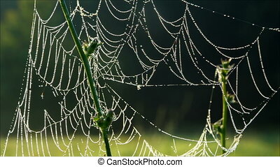 Morning dew on spiderweb with drops, closeup