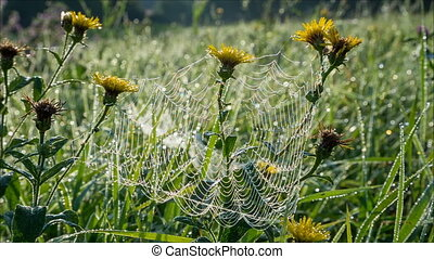 Morning dew on spiderweb with drops on yellow flowers