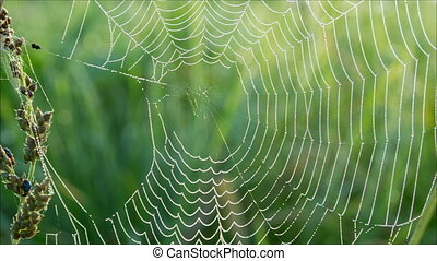 Morning dew on spiderweb with green natural background,...