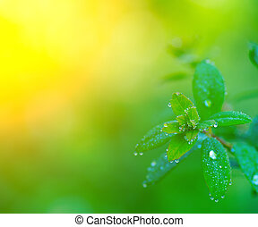 Morning dew on the leaves