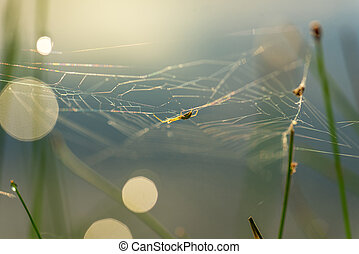 Morning drops of dew in a spider web.