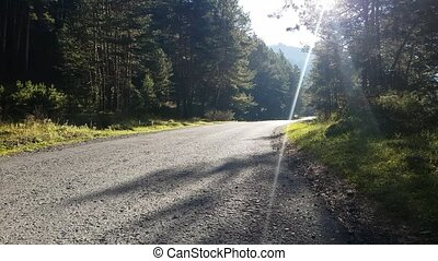 Morning. Empty forest road, route in the countryside without car