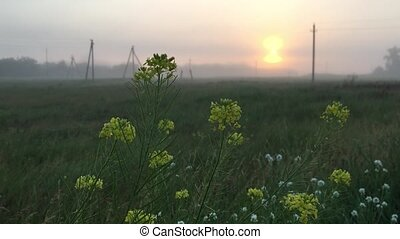 morning field fog electric poles Russia village province -...