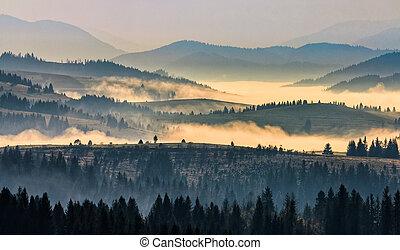 morning fog among trees - morning autumn landscape. fog...