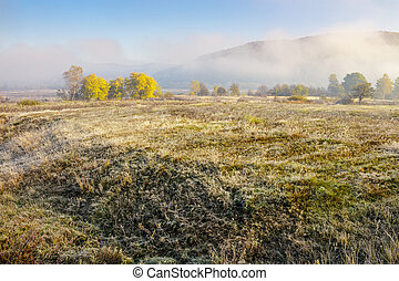 morning fog among trees on meadow at the foot of the...