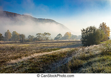morning fog among trees on meadow in mountains under clear...