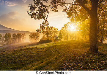 morning fog among trees on meadow in mountains under heavy...