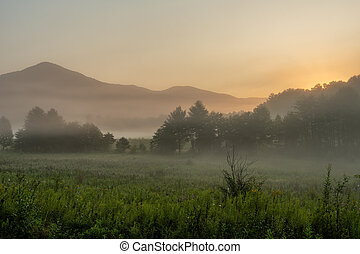 Morning Fog Hangs Over Cades Cove in the Smokies