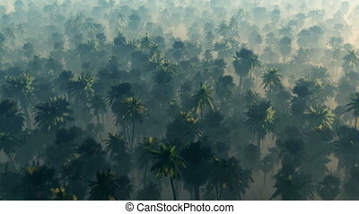 morning fog in dense tropical rainforest. aerial