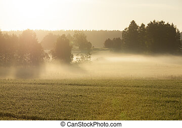 Morning fog in meadow
