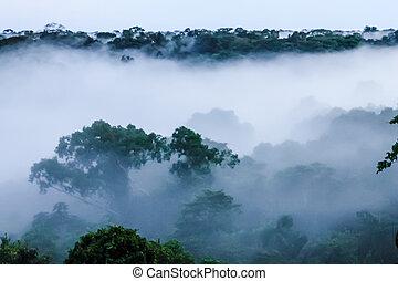 Morning fog in the brazilian rainforest by Javari river