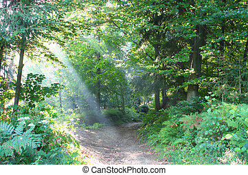 Morning Fog - Morning in the wood with sun beam