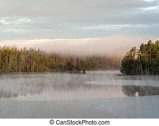 morning fog on a forest lake