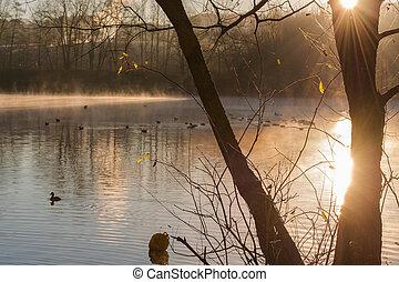 Morning fog on a lake Abtskuecher pond in Heiligenhaus