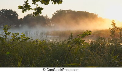 Morning fog on a quiet lake in the rays of rising sun
