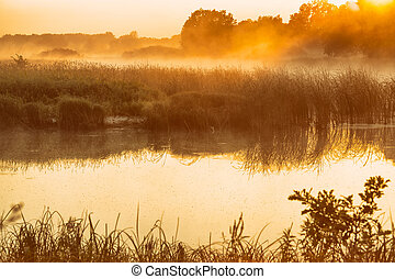 Morning fog on lake in the rays of the rising sun