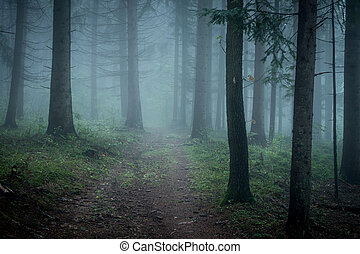 Morning fog on the forest somewhere in europe