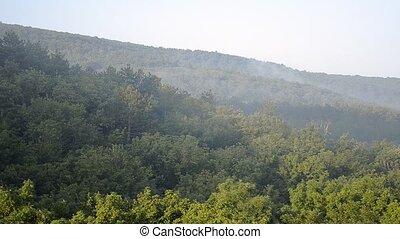 Morning Fog Rising From Forest