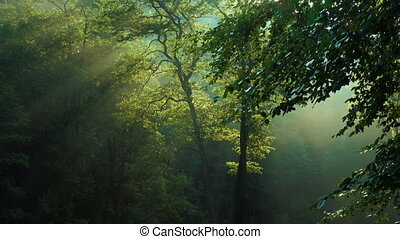 morning forest trees with raising sun beams after the rain