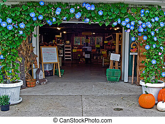 Morning Glory Arch - Morning Glory arch over country store.