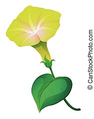 Morning glory flower with green leaf illustration