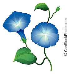 Morning glory flowers in blue color illustration