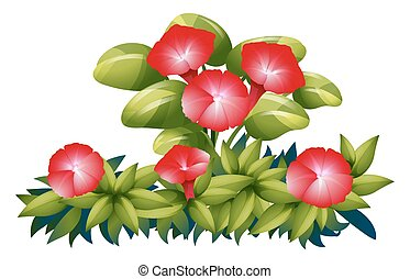 Morning glory flowers in red color illustration