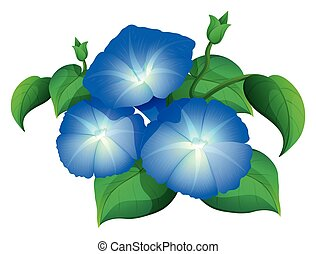 Morning glory in blue color illustration