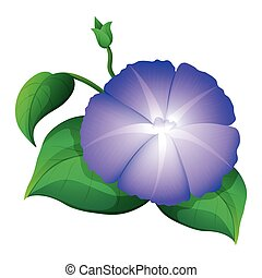 Morning glory in purple color illustration