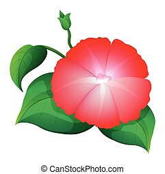 Morning glory in red color illustration