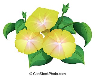 Morning glory in yellow color illustration