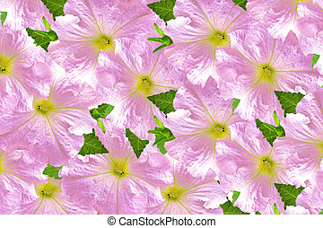 morning glory. Natural floral background.