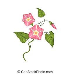 Morning Glory Wild Flower Hand Drawn Detailed Illustration....