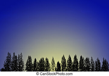 Line of fir trees in early morning