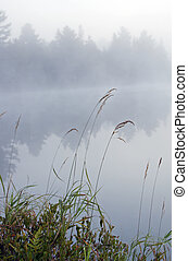 Morning - Green grass on the shore of the lake in the erly...
