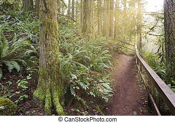 Morning Hike at McDowell Creek Falls Park