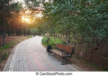 Morning in park.