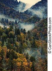 Morning in Smoky Mountains - Morning in Smoky Mountains -...