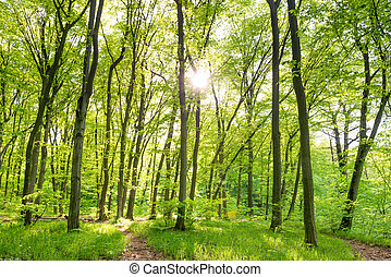 Morning in sunny forest