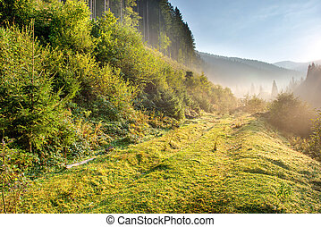 Morning in the green forest