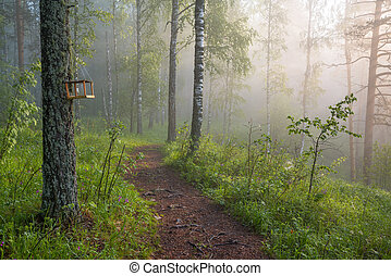 morning in the magic forest