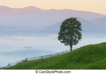 Morning in the village landscape with lonely tree