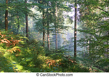 Morning in the wood