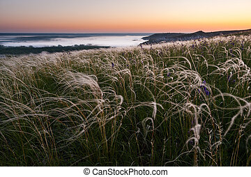 Morning landscape with feather grass