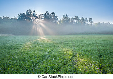 Morning Landscape with Meadow