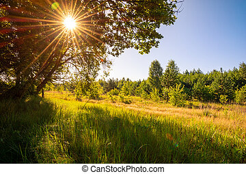 Morning landscape with trees, grass and sunlight
