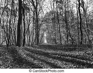 Morning light in a woodland in black and white