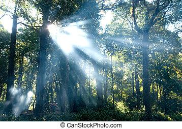 Morning light in deep forest.